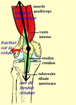 Rotule for Douleur au genou gauche interieur